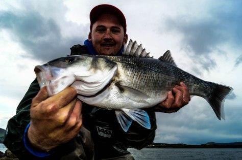 60cm Bass