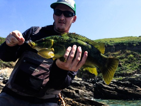 Cornish wrasse with Nick