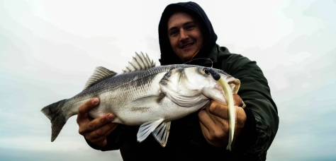 Irish Estuary Bass